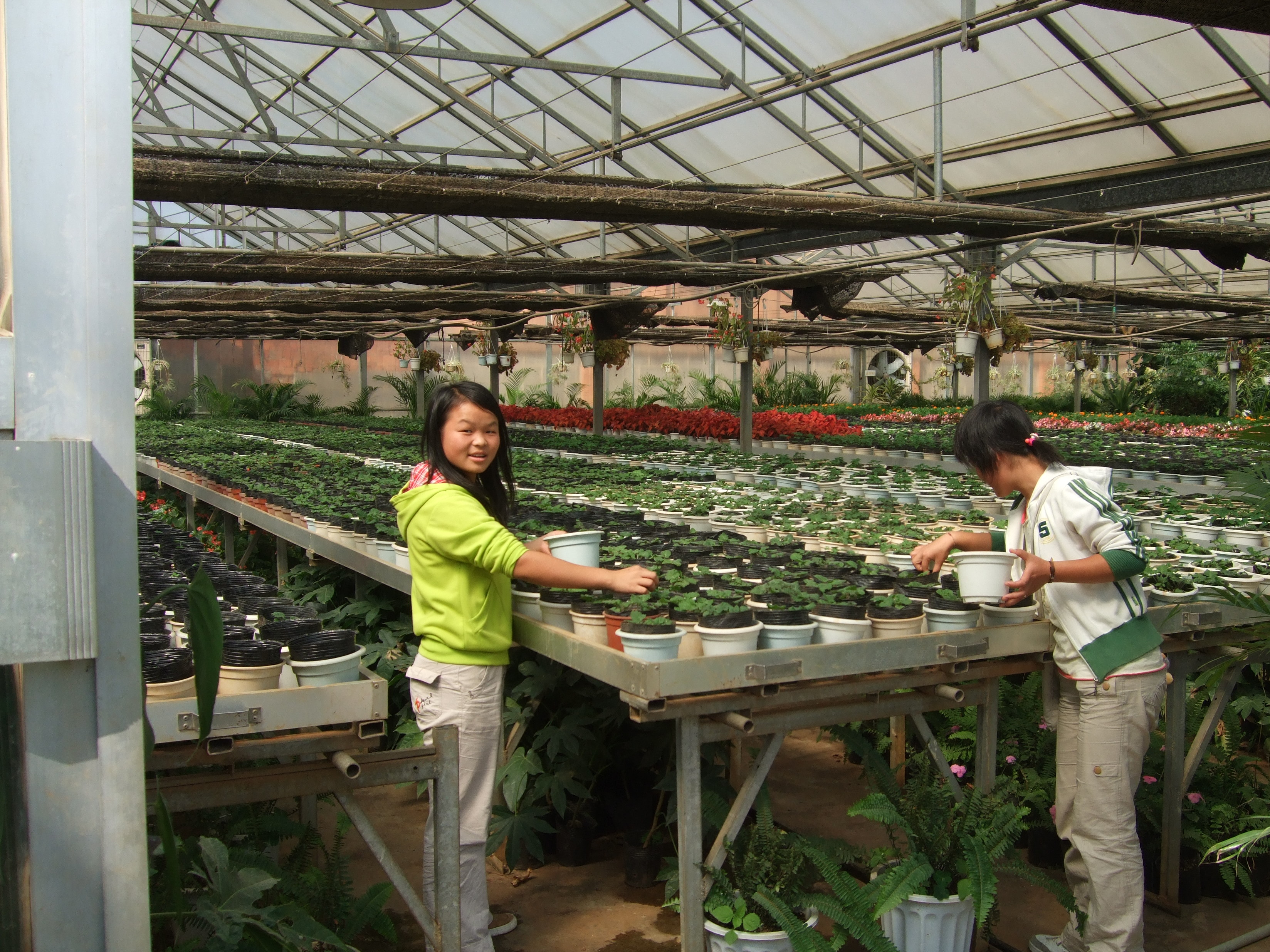 Chinese, Vietnamese, Thai floriculture