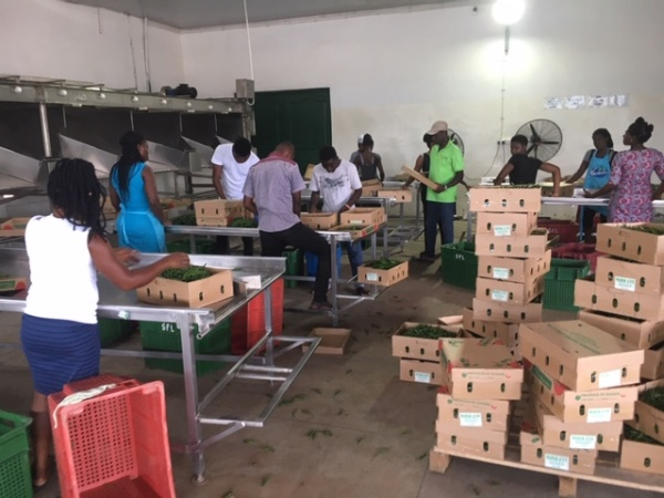 Sourcing fruit and vegetables in Ghana