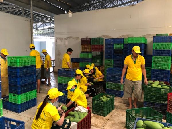 Climate resilient fruit sector Vietnam