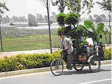 Chinese, Vietnamese, Thai floriculture