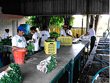 Export coaching young plants