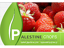 Marketing Palestine Crops