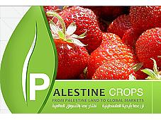 Marketing Palestine Crops
